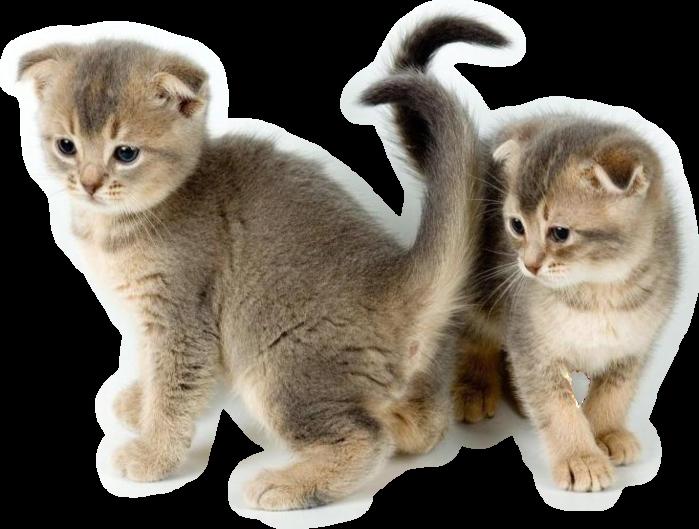 Как лечить у кошек отодектоз 89