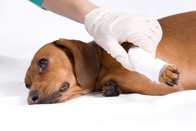 21Почему собаки зализывают раны человеку