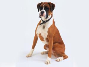 лечение уретрита у собак