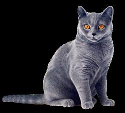 Грибок кожи у кошек
