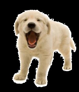 Отит у собак