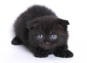 Лечение ринита у кошки