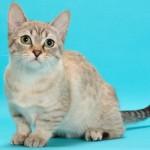 панкреатит кошки