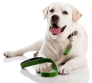 недержание у собак