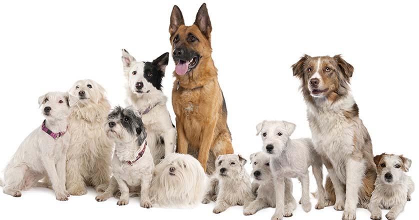 Причины цистита у собак