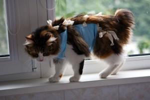 Полноценный уход за кошкой после стерилизации