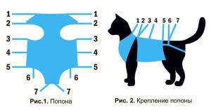 cat-bandage